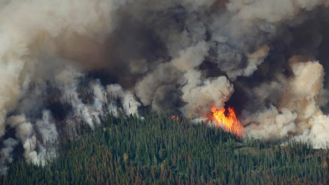 carlton complex fire devastates washington state